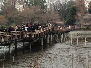 橋の上に多数の見物客